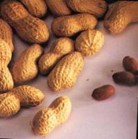 La cacahouète est très riche en protéines