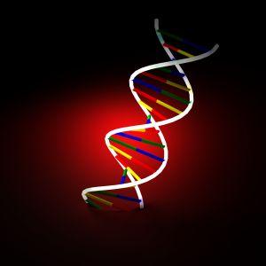 Modèles et structure des protéines