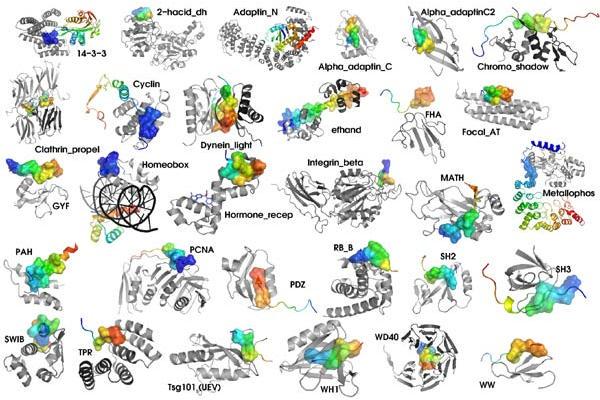 Différentes molécules qui sont des protéines